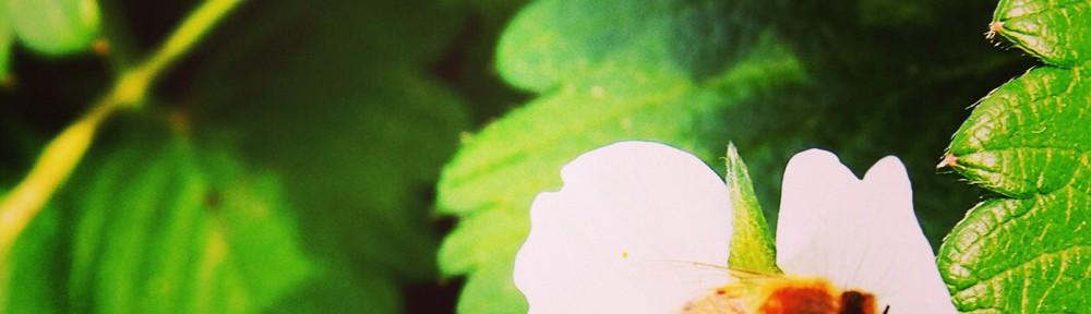 今日の一枚[15]-イチゴ食べ過ぎ注意-