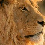 沖縄のライオンズマンションがライオンズマンションじゃない件について